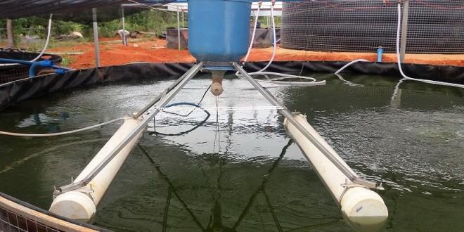 Alimentador flutuante